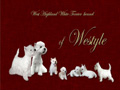 WESTYLE kennel - West Highland White Terriers
