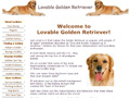 Lovable Golden Retriever