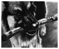 Charcoal Pet Portraits - Exquisite Pet Drawings by Celeste Gillis