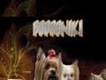 Bodroniki Kennels. Dogs breeder in Kent, UK.