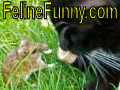 Feline Funny A fun site for cat lovers around the world