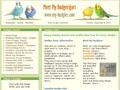Meet My Budgerigars | Budgerigar - Budgie - Parakeet